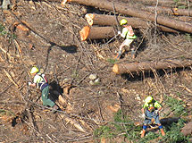 Rosewarne Contractors backpulling trees, Tory Channel
